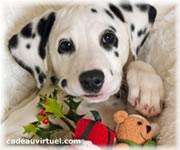 Cliquez pour choisir Un dalmatien