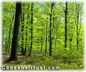 Une ballade en forêt