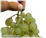 Cliquez pour choisir Une grappe de raisins !