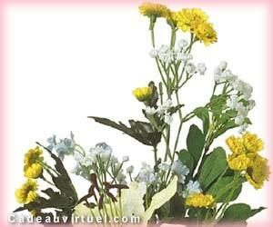 Si ces fleurs pouvaient parler...