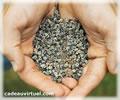 Cliquez pour choisir Des graines pour resemer