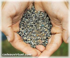 Des graines pour resemer