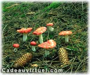 Des champignons vénéneux