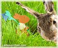 Cliquez pour choisir Chercher le lapin !