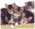 Cliquez pour choisir une 'chat party'