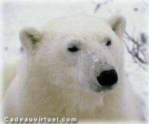 un polaire pour te rechauffer
