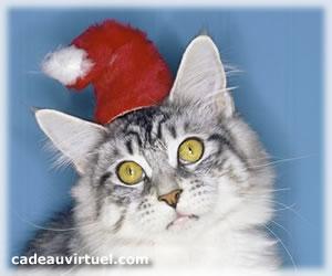 Le chat-Noël !
