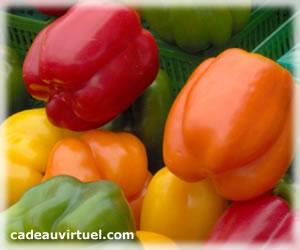 Le plein de légumes BIO